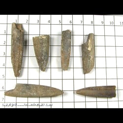 Minerals Specimen: Belemnites from Muskegon Co,  Michigan