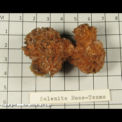 Mineral Specimen: Selenite Rose from Western Texas