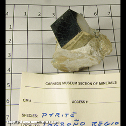 Mineral Specimen: Pyrite in Marl from Logrono, Spain