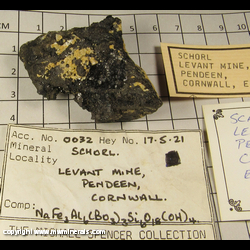 Mineral Specimen: Schorl Tourmaline from Geevor Mine (North Levant Mine), Pendeen, St Just, St Just District, Cornwall, England