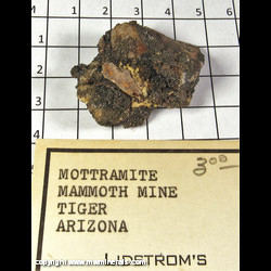 Mineral Specimen: Mottramite from Mammoth-Saint Anthony Mine, Tiger, Pinal Co,  Arizona