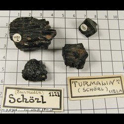 Mineral Specimen: Schorl Tourmaline from Location Unknown