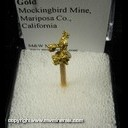 Mineral Specimen: Gold from Mockingbird Mine, Mariposa Co., California