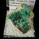 Minerals Specimen: Mixite, Chrysocolla from South Pit, Gold Hill Mine, Tooele Co., Utah