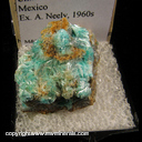Minerals Specimen: Aurichalcite from Chihuahua, Mexico, Ex. A. Neely 1960s