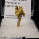 Mineral Specimen: Gold Crystals from Mockingbird Mine, Mariposa Co., California