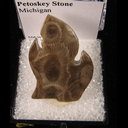 Mineral Specimen: Petoskey Stone from Michigan