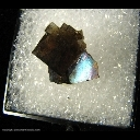 Minerals Specimen: Fluorite, Iridescent from Holloway Quarry, Berlin Twp., Monroe Co., Michigan Collected by J. Medici