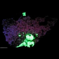 Minerals Specimen: Spessartine Garnet, Smoky Quartz, K-Feldspar, Hyaline Opal from Tongbei, Yunxiao County, Zhangzhou Prefecture, Fujian Province, China