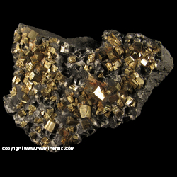 Minerals Specimen: Pyrite on Slate from Sommerville, Surgarcreek Twp., Armstrong Co., Pennsylvania