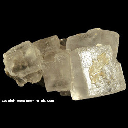 Mineral Specimen: Halite Crystals from American Salt & Coal Company Mine, Lyons, Rice Co., Kansas